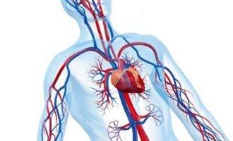 Как улучшить кровообращение тела
